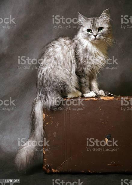 Cat on a suitcase picture id144291067?b=1&k=6&m=144291067&s=612x612&h=c9dam9oldn lmml87kod0yf3wlhsi3igzb3fssxyer8=