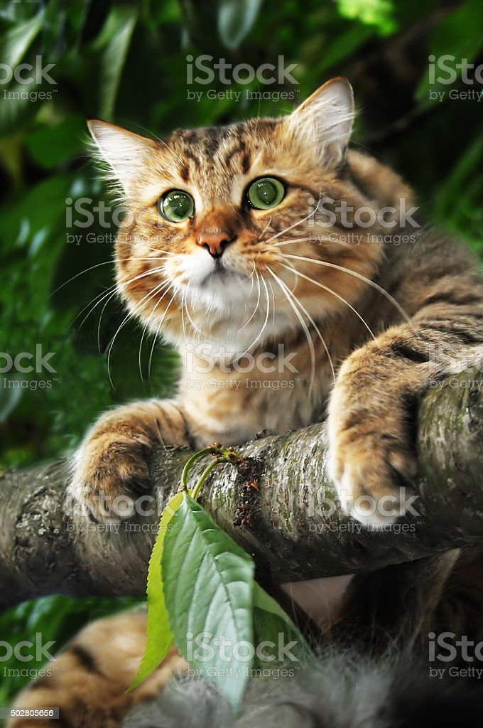 Cat on a tree branch stock photo
