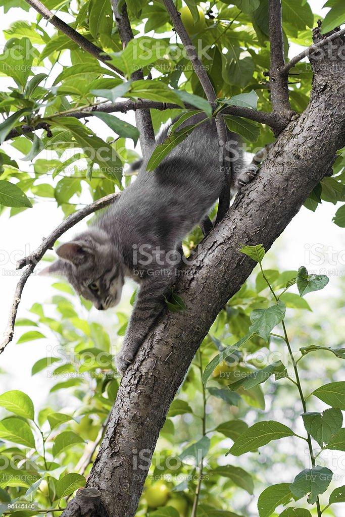 Cat on a tree stock photo