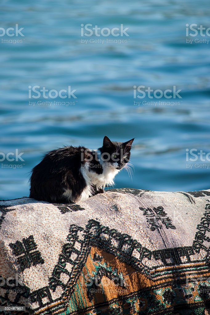 Cat on a turkish rug stock photo