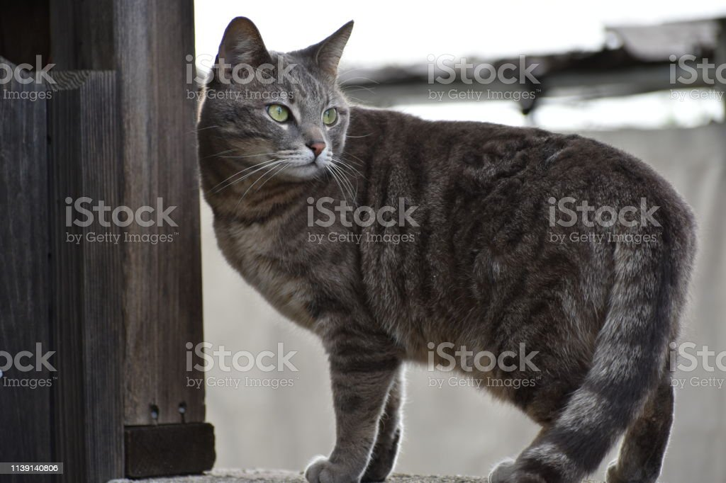 Cat on a Wall Looking away stock photo