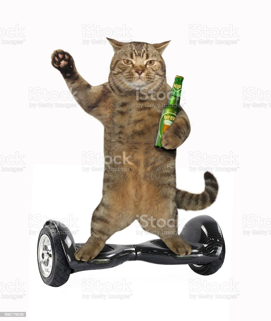 Cat on balance scooter 4 stock photo