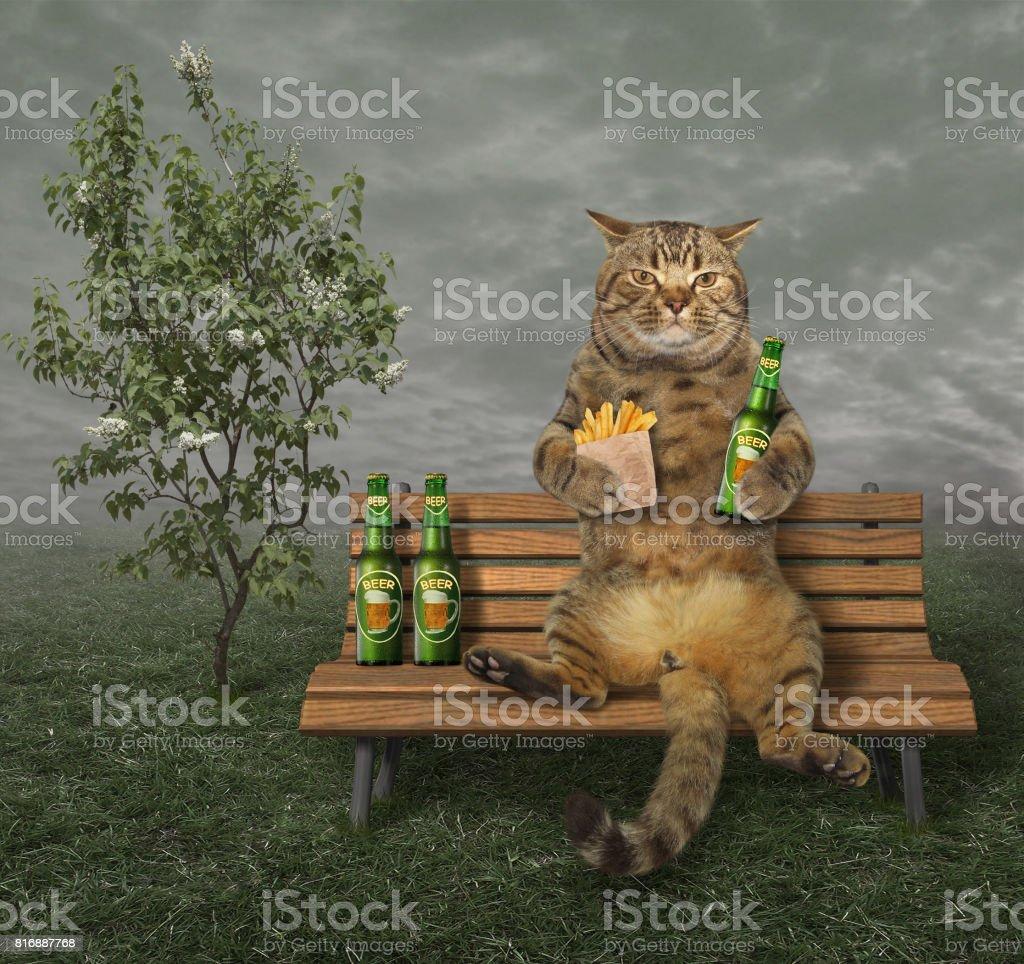 Katze auf Bank 2 – Foto