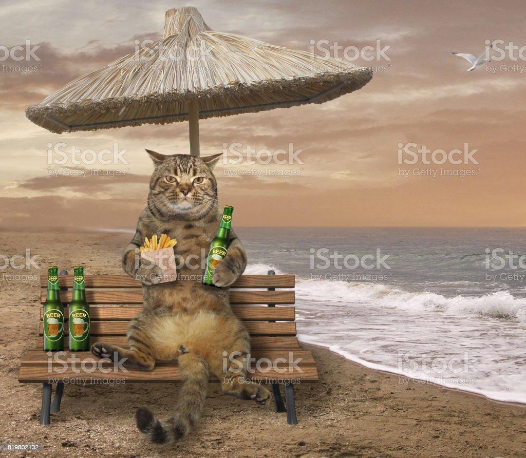 Katze auf Bank 3 – Foto