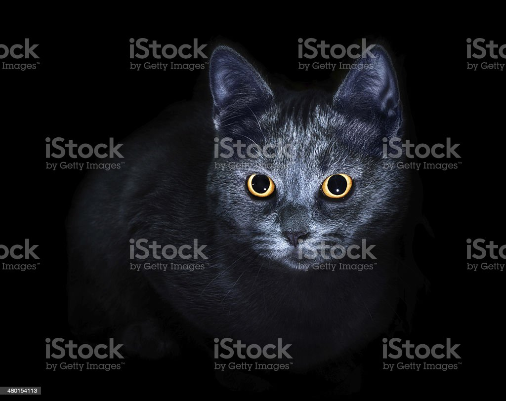 Cat on black background royalty-free stock photo