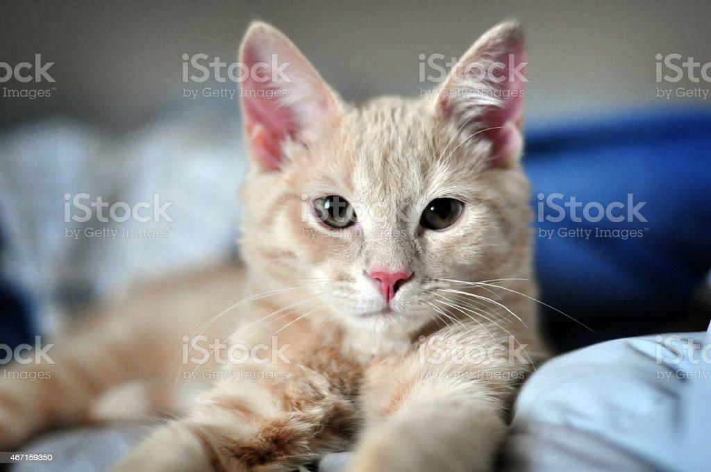 Katze auf Blau – Foto