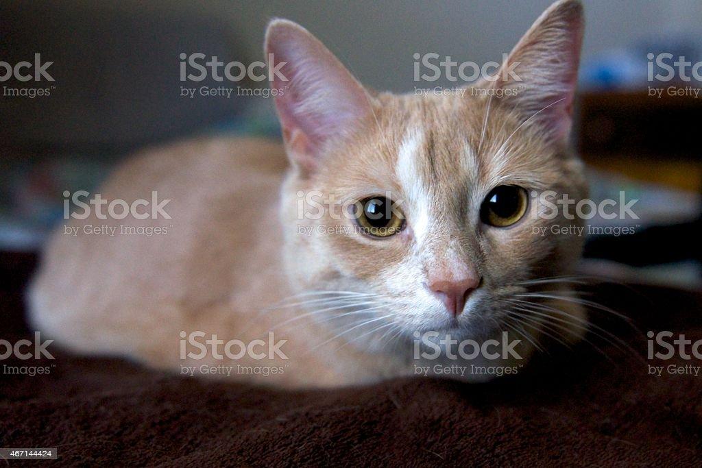 Katze auf Braunes Blanket – Foto
