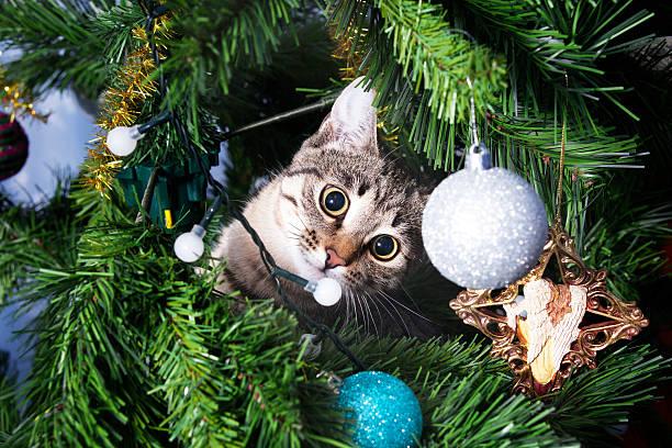 Cat on christmas tree naughty kitten new year picture id637395164?b=1&k=6&m=637395164&s=612x612&w=0&h=w dzdas08aaqmodklejpxf7xlfiphewf9ce7zrauc5u=