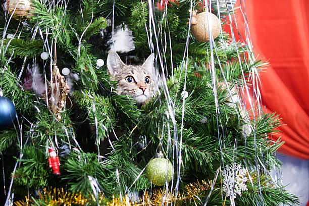 Cat on christmas tree new year picture id630021598?b=1&k=6&m=630021598&s=612x612&w=0&h=w4a ywsa0i uiq qi4eletjf2xfi6ttpswu7rgogblw=