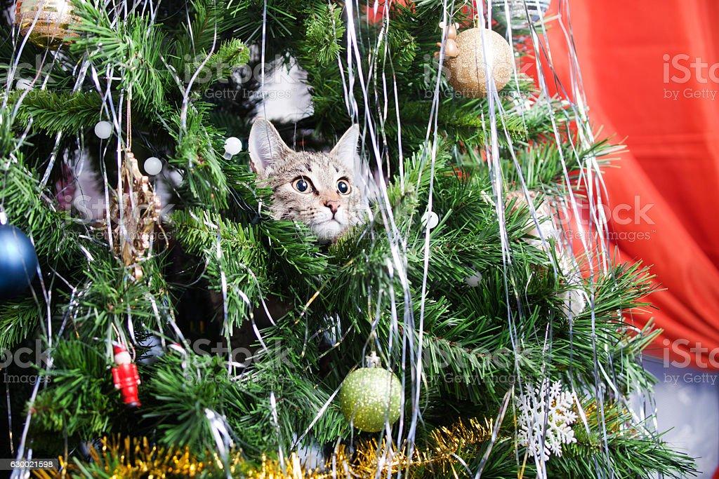 Cat on Christmas tree. New Year stock photo