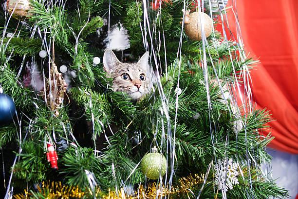 cat on christmas tree. new year - katze weihnachten stock-fotos und bilder