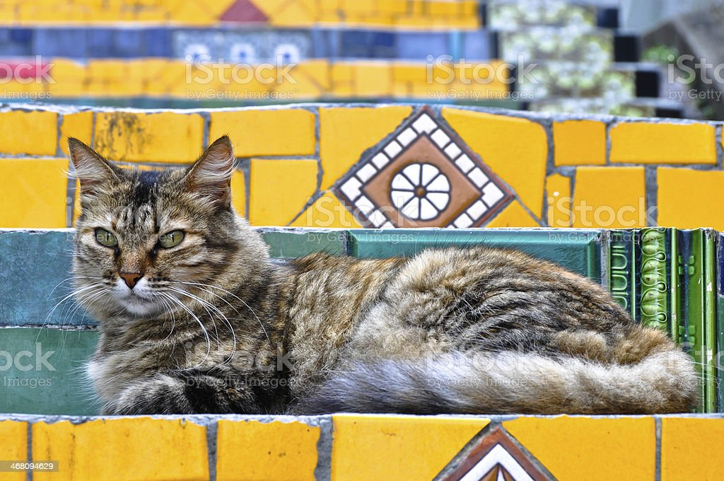 Cat on Colorful Stairs stock photo