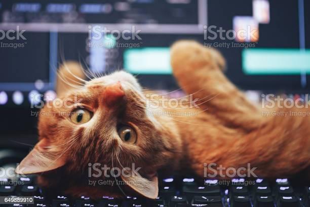 Cat on computer keyboard picture id649889910?b=1&k=6&m=649889910&s=612x612&h= ei uqnjnh1 4bc4xiwjkf7c0k7s8flg4 jbu2exv6u=