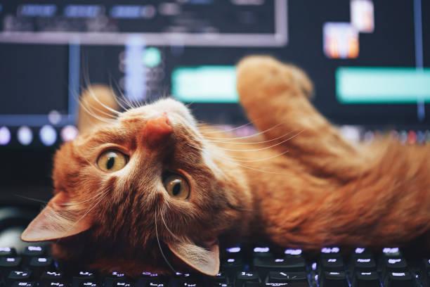 Cat on computer keyboard picture id649889910?b=1&k=6&m=649889910&s=612x612&w=0&h=iyxqeld hwoo8mqiymafawzoqjntgdg7mkzcvimvxjq=
