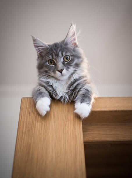 Cat on dining table picture id1152048879?b=1&k=6&m=1152048879&s=612x612&w=0&h=6dktuv0s03ctsw0pf0i9xn u 39lna8 zg2u28pfj c=