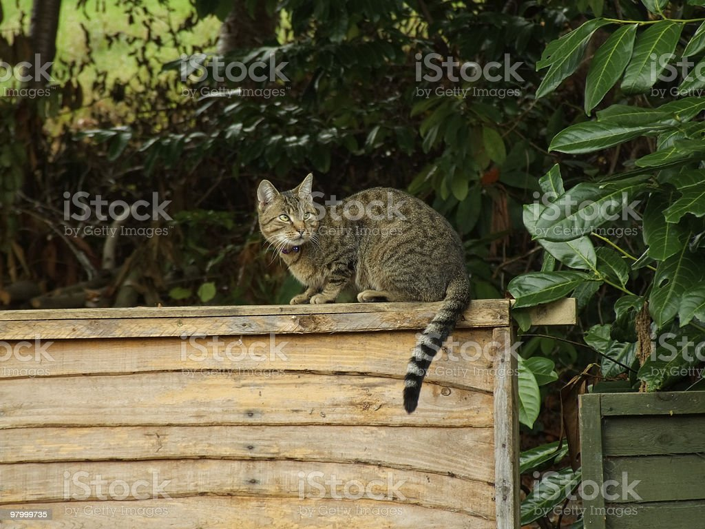 Cat on Fence royalty-free stock photo