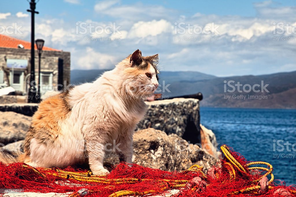 Cat on fishing net looking out to sea stock photo