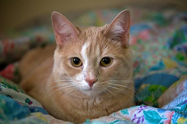 Katze auf Blume Decke – Foto