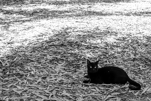 Cat on forest floor