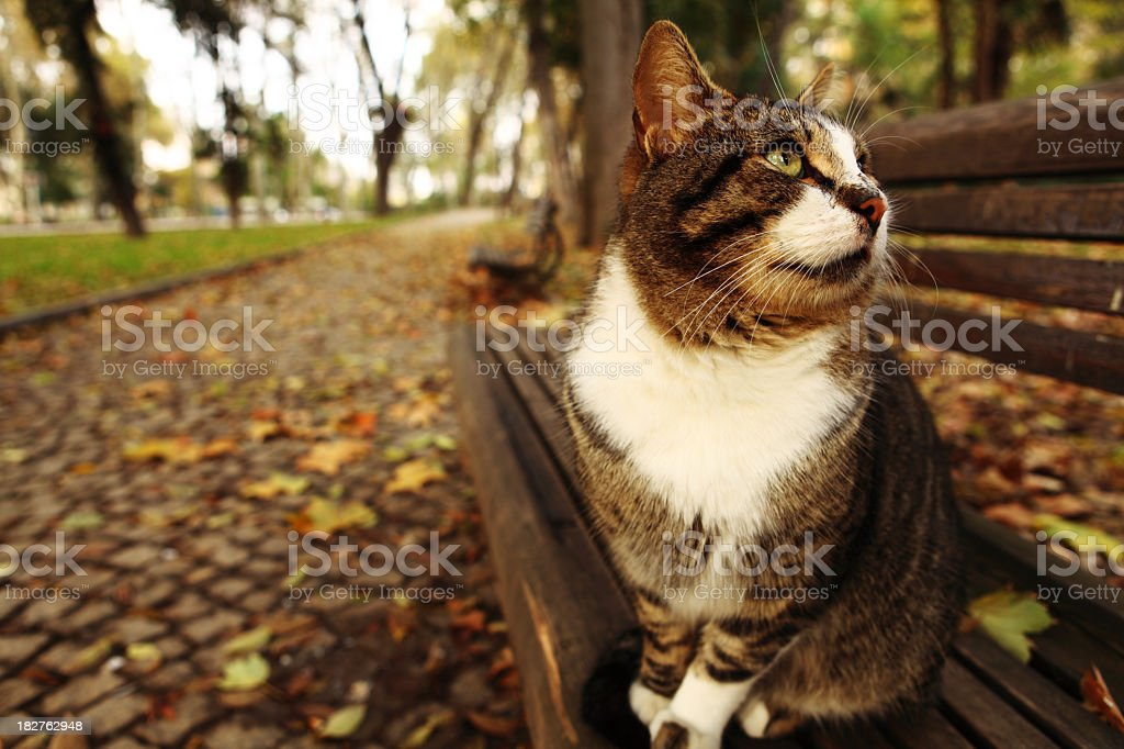 Outstanding Cat On Garden Bench Stock Photo Download Image Now Istock Inzonedesignstudio Interior Chair Design Inzonedesignstudiocom