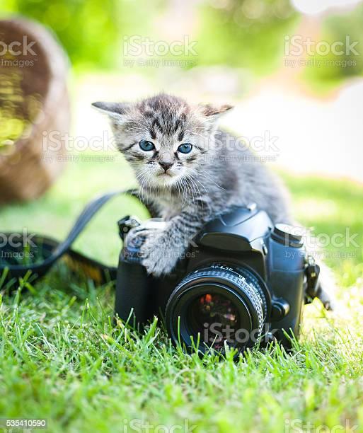 Cat on grass picture id535410590?b=1&k=6&m=535410590&s=612x612&h= ifmddhoftq7ml1srdyoqhvuhzl9htxlq 5yfppmmng=