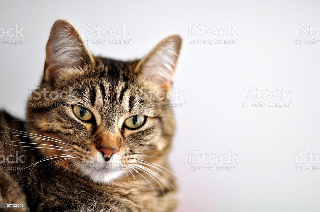 Katze auf Grau – Foto