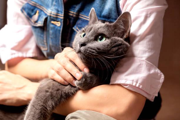 Cat on hands picture id682964718?b=1&k=6&m=682964718&s=612x612&w=0&h=kqihmxo8atmsl8ylavfbjn2a4aakh5wgd3j6 seizc4=