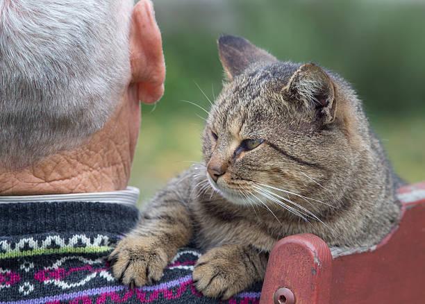 Cat on mans shoulder picture id506238652?b=1&k=6&m=506238652&s=612x612&w=0&h=1jmm 7jvcnzmg6mxpvv1ncbbjplcnibuggsqk1g7t1w=