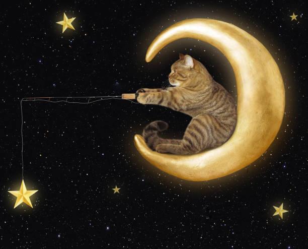 cat on moon catches stars - fishman imagens e fotografias de stock
