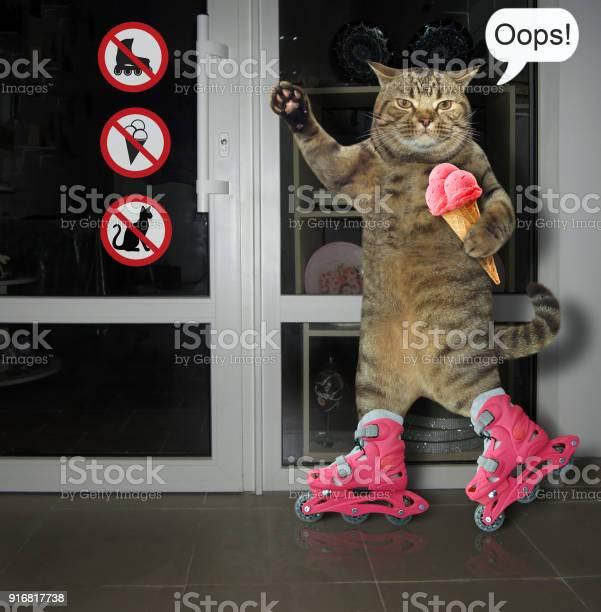Cat on roller skates picture id916817738?b=1&k=6&m=916817738&s=612x612&h=fsyxlt7r bcdp9wjnhkkvitnobcmxvjxci3bml7c2vy=