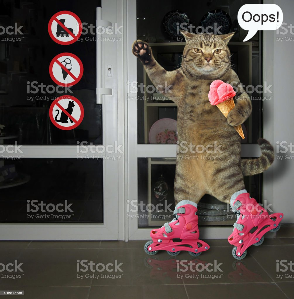 Chat sur patins à roulettes - Photo