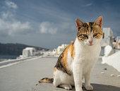 Taken in Santorini, Spring of 2020
