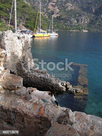 istock Cat on ruin next the sea 483213676