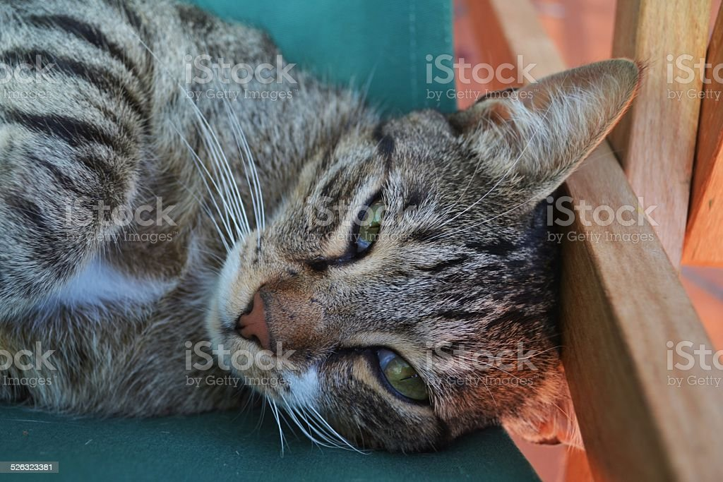 Cat on sun bed stock photo