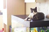 Domestic cat is resting on top of the aquarium indoors.