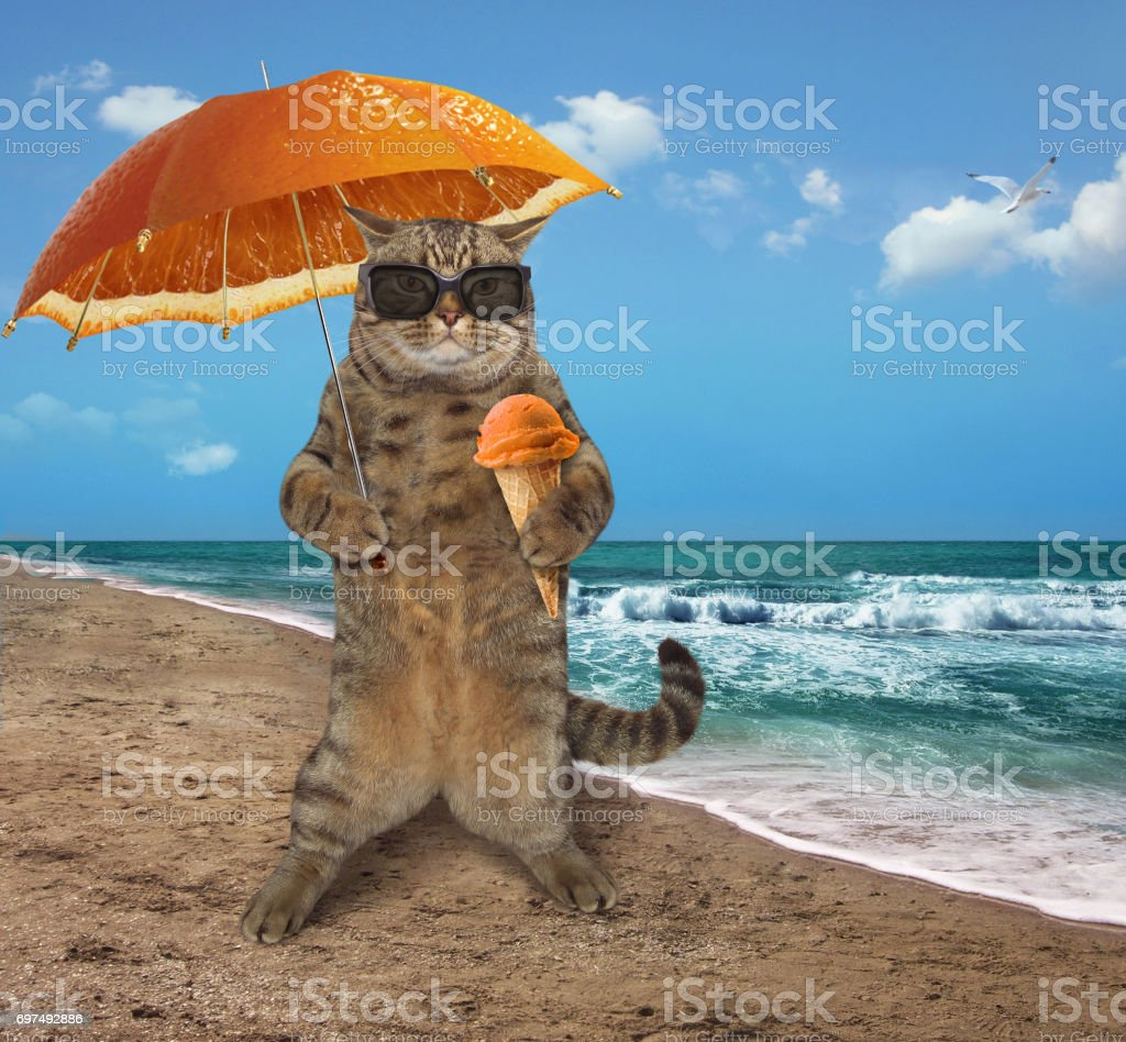 The cat tourist with an umbrella and fruit ice cream is on the beach.