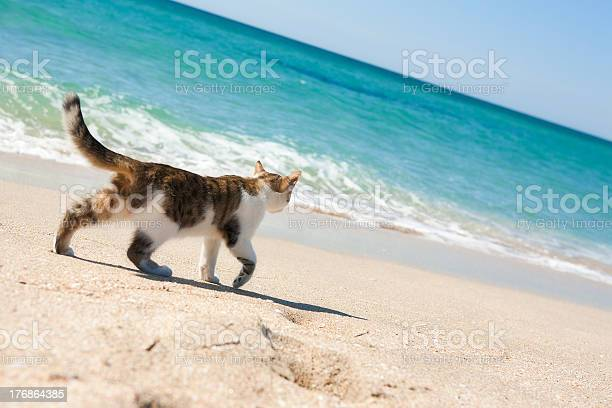 Cat on the beach picture id176864385?b=1&k=6&m=176864385&s=612x612&h=teb4mvo0 9iajxqzlvih9vqacxzif7lp5byxu25uo1g=