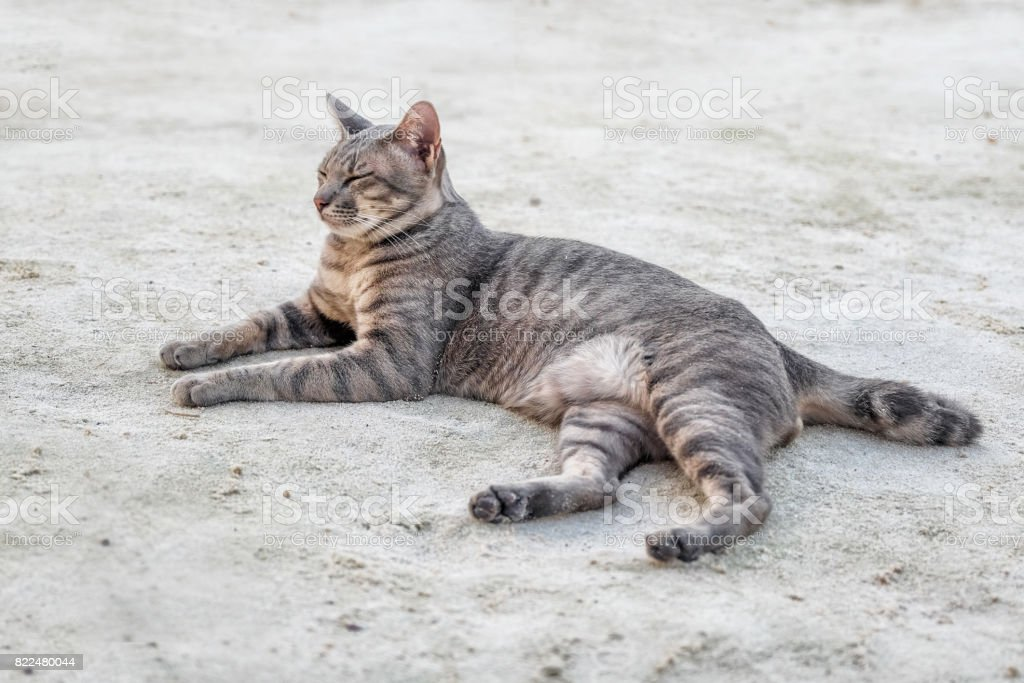 Cat on the beach stock photo