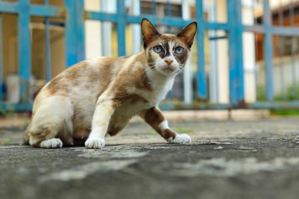 Cat on the concrete floor picture id1012293912?b=1&k=6&m=1012293912&s=612x612&w=0&h=dijaebqirerbnvmmp5lcicuykmxvdae55klgnw8mxa0=