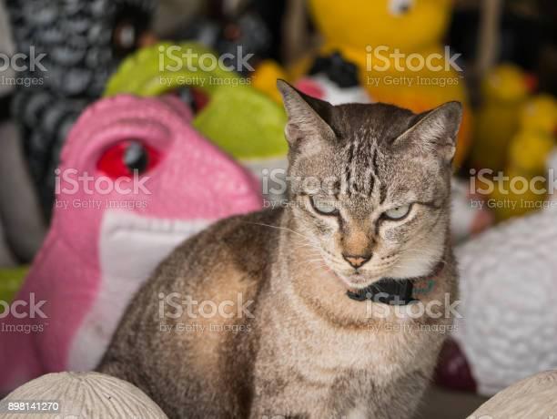 Cat on the doll shop picture id898141270?b=1&k=6&m=898141270&s=612x612&h= f4zdlcb32lwsmcwemjofs2u0rfu6b5qghviepgja1g=