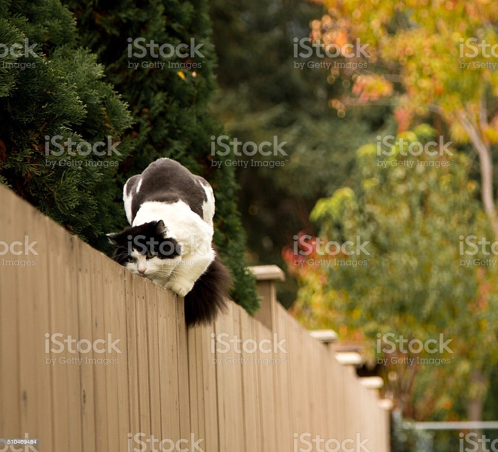 cat on the fence stock photo