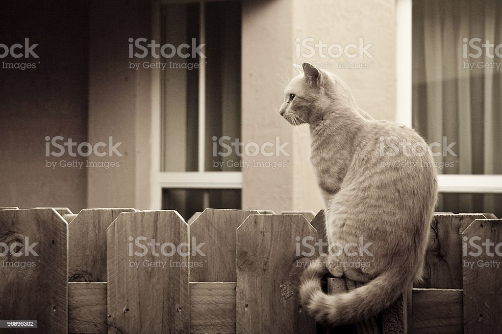 Cat on the fence royalty-free stock photo