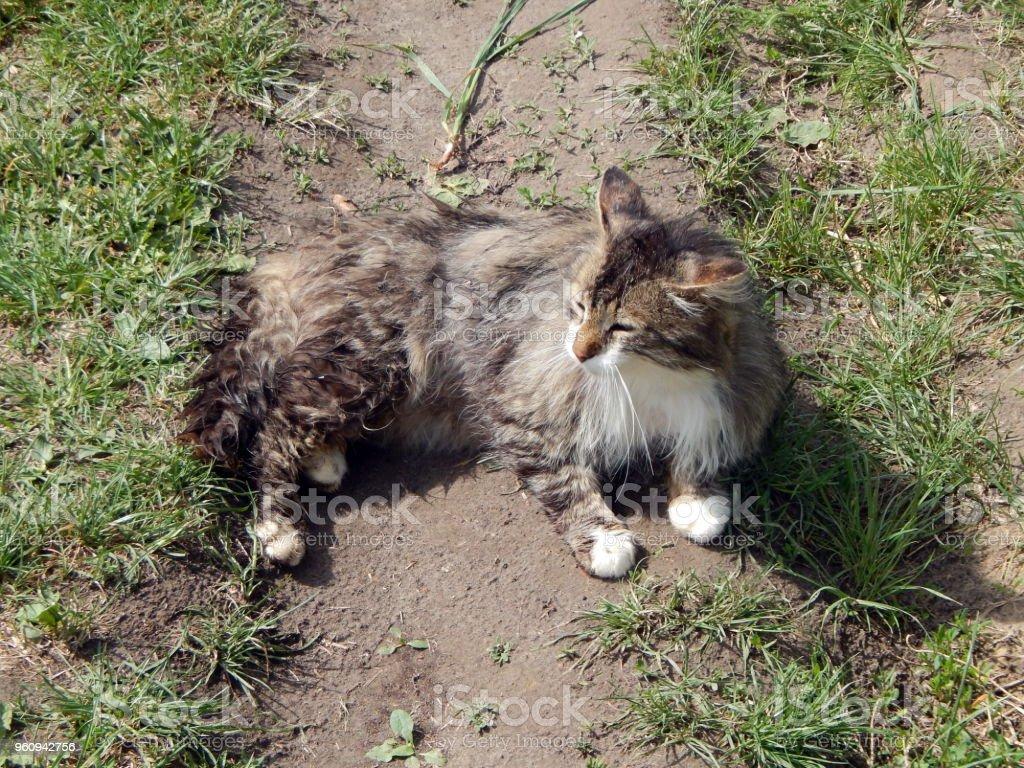 Katze auf dem Boden, Fütterung einer Katze - Lizenzfrei Erdreich Stock-Foto
