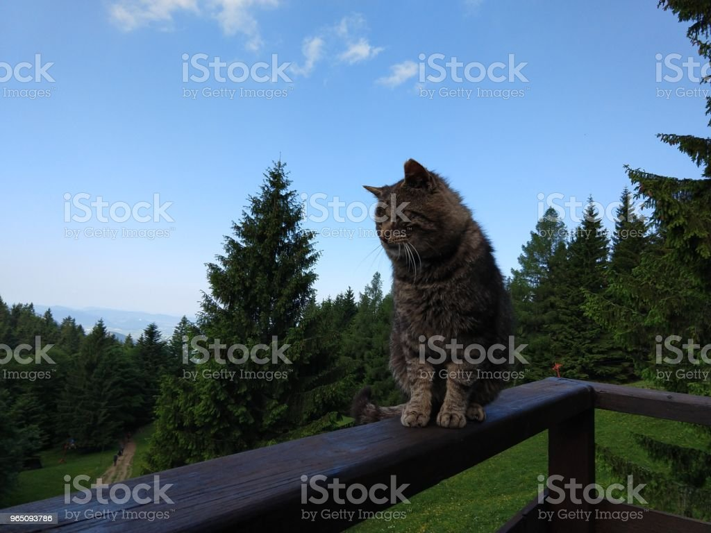 Cat on the hill. zbiór zdjęć royalty-free