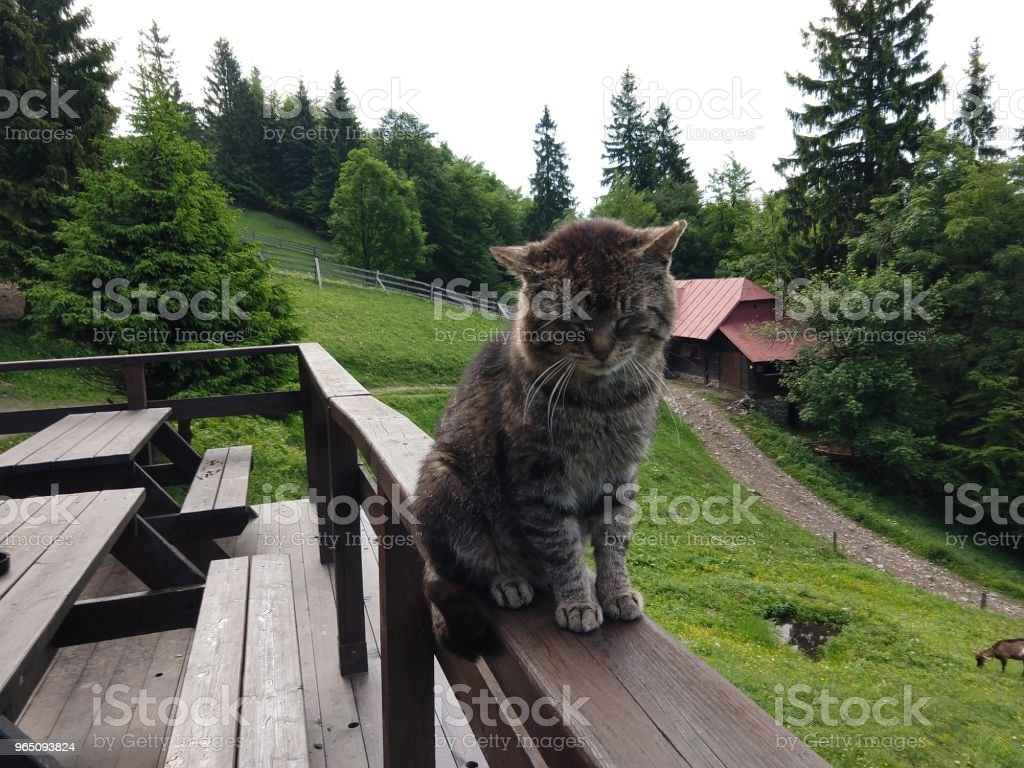 Cat on the hill. royalty-free stock photo