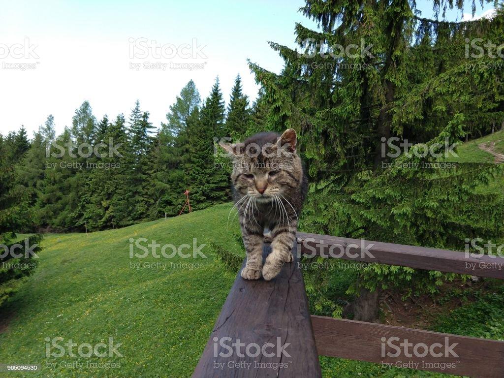 Cat on the hill. zbiór zdjęć royalty-free