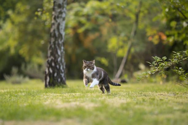 Cat on the hunt in garden picture id1056502290?b=1&k=6&m=1056502290&s=612x612&w=0&h=iqygve3lflsuwwxjlgdsfkp8jheu8vwil99ltol3kry=