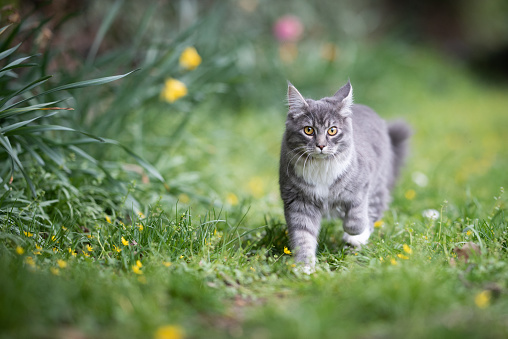 cat on the move