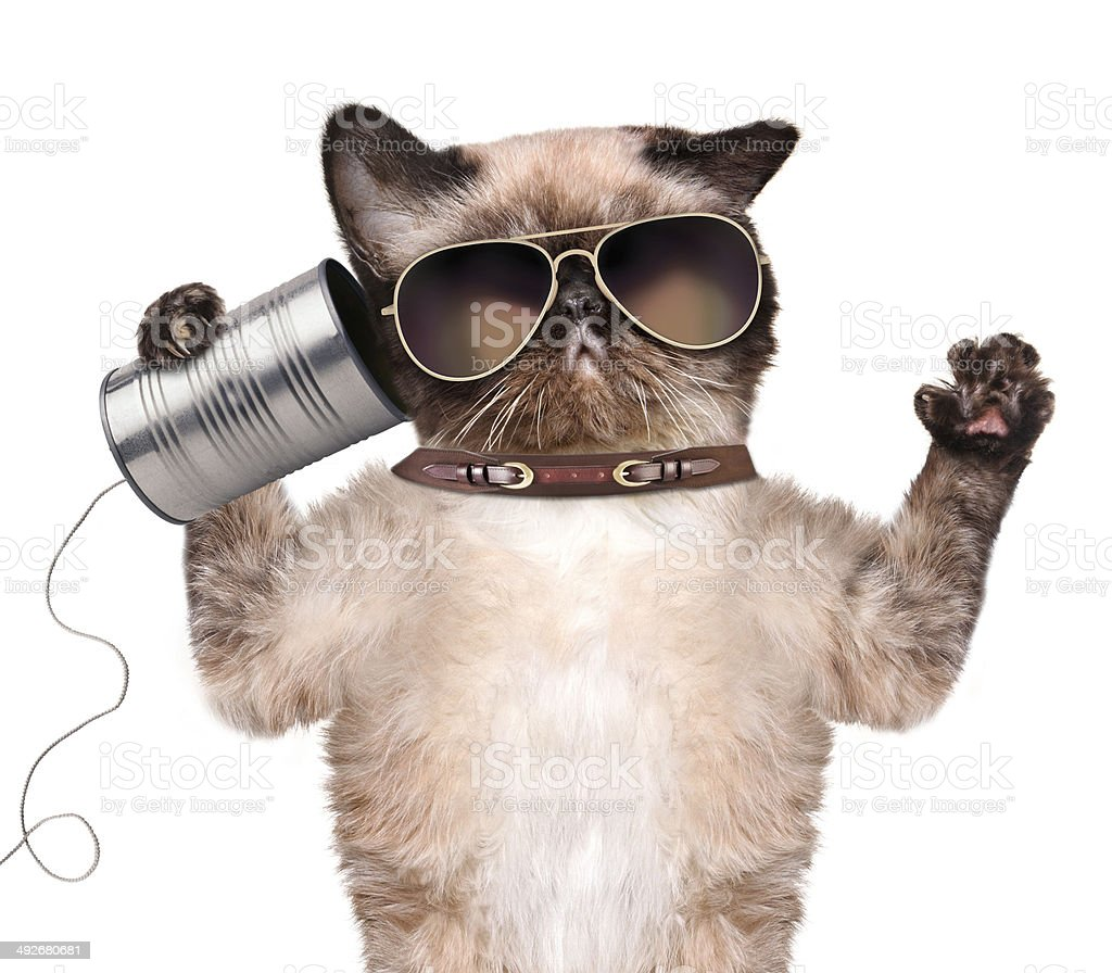 Cat on the phone with a can stock photo