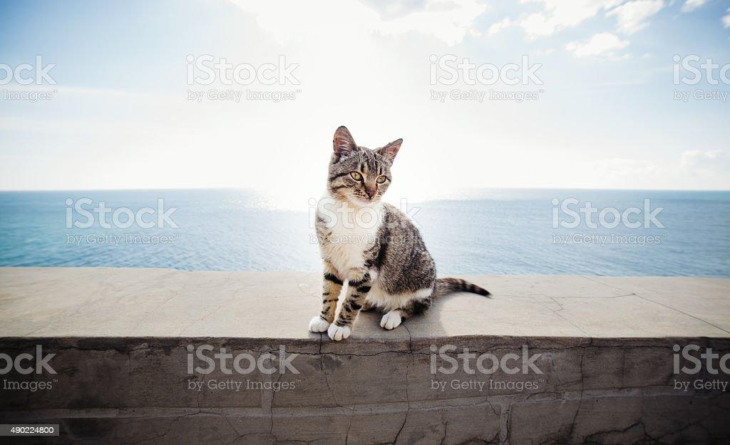 Cat on the pier near the sea stock photo